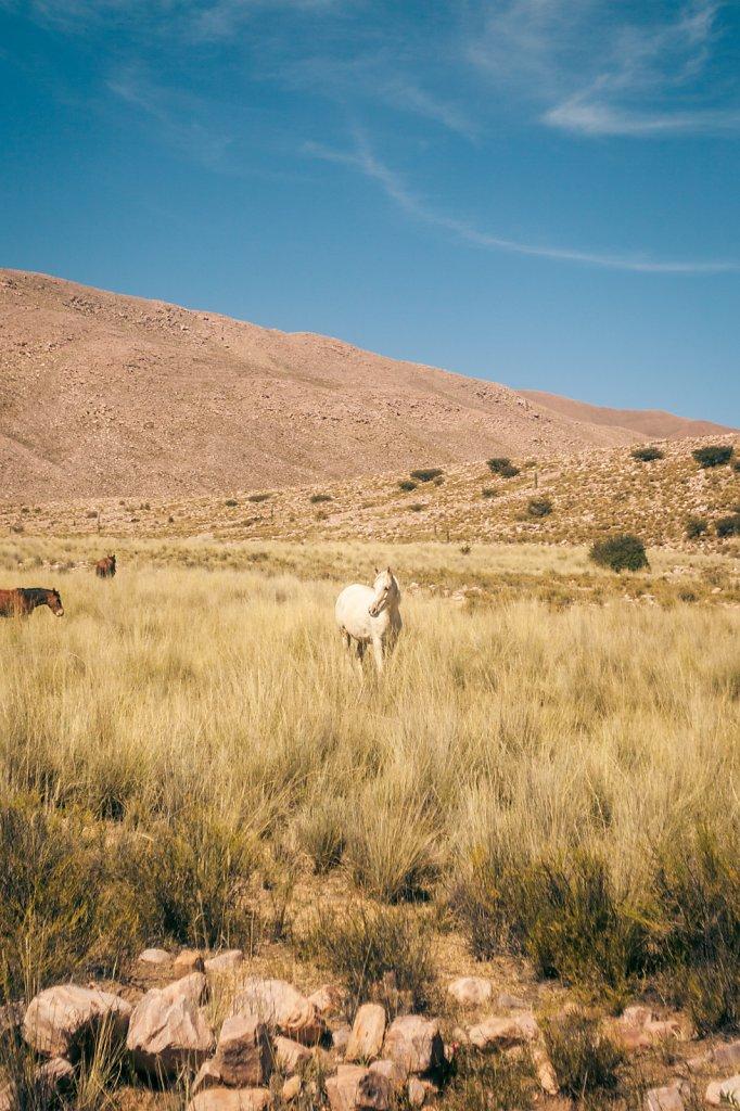 argentinien-461.jpg
